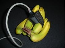 BananaRipenessSensorPhoto