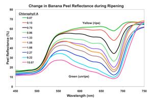 Banana_ChloroA_Plot