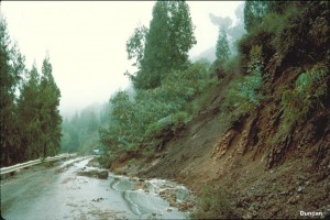 Although only the upper two or three feet of the ground is involved in a flow slide, the rapidly moving material is capable of knocking down and carrying along large trees, as in this slide along Fish Ranch Road in the hills east of Berkeley, California.