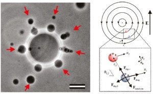 vesicles_point_dipoles