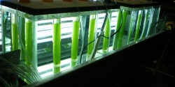 Biofuels Production from Microalgae: Production, Storage, and Delivery